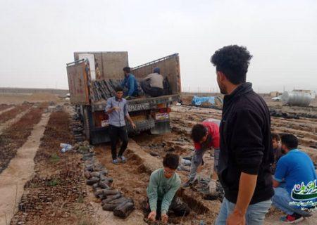 ۲۰ هزار اصله نهال مثمر در دهستان کوهدشت شمالی توزیع میشود/ایجاد اشتغال پایدار برای ۳۰۰ نفر